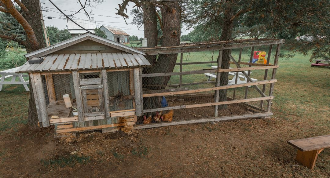 Chicken coop at Ferme Guy Rivest