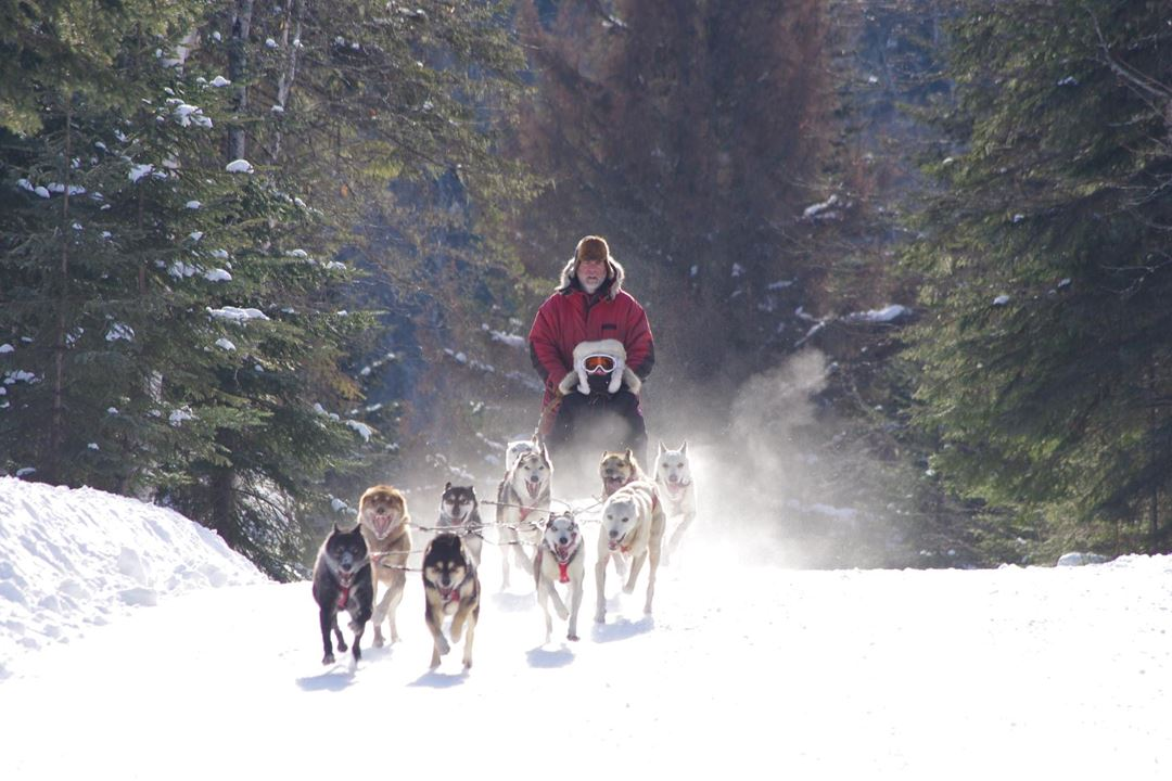 evasion-nature-expedition-k9-chiens-traineau